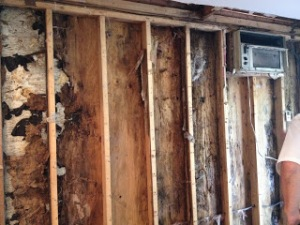 rotted wall3