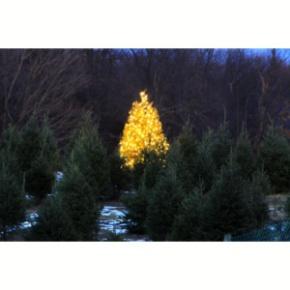christmas-tree-farm-096