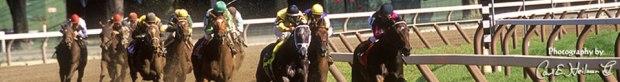 xx1 horses